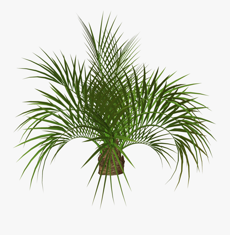 Transparent Palm Plants Png, Transparent Clipart
