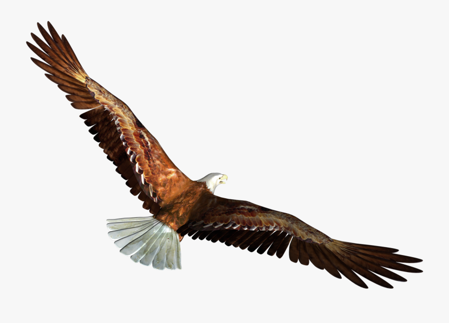 Eagle Clipart In Flight - Eagle Flying Gif Png, Transparent Clipart