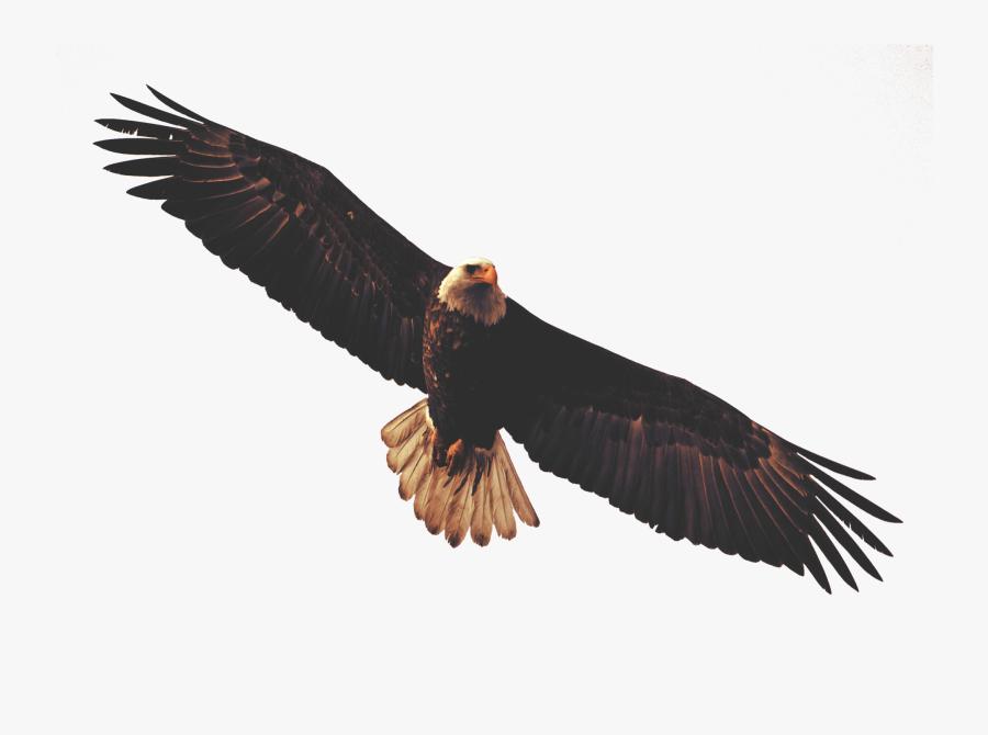Golden Eagle Clipart Dead Eagle - Eagle Flying Transparent Background, Transparent Clipart