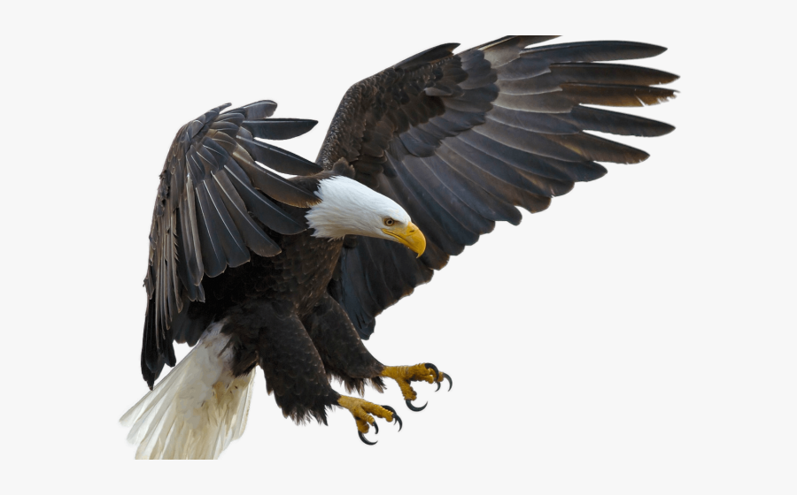 Transparent Eagle Feather Png - Eagle With Talons Out, Transparent Clipart