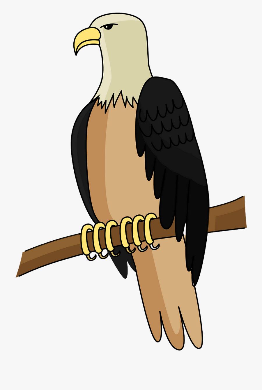 Bald Eagle, Transparent Clipart