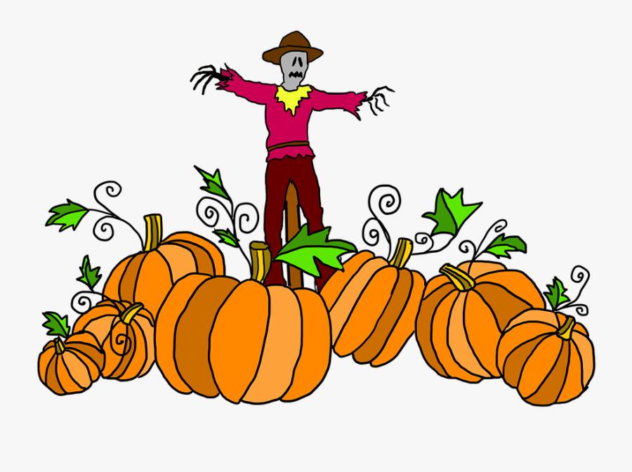 Pumpkin Patch, Pumpkin, Halloween, Harvest, Vegetable - Clipart Cartoon Pumpkin Patch, Transparent Clipart