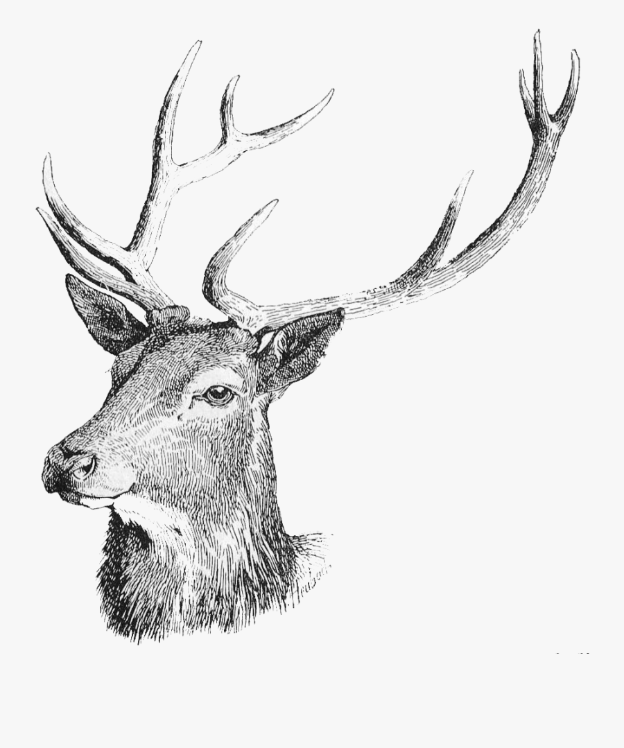 Deer Head Png Free Download - Deer Head Deer Transparent Background, Transparent Clipart