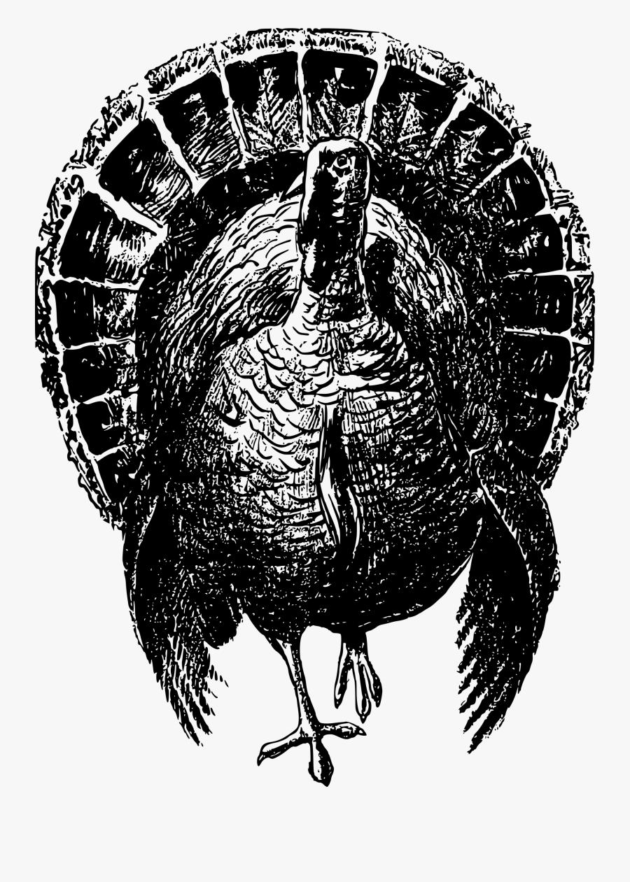 Turkey,domesticated Turkey,beak - Black And White Wild Turkey, Transparent Clipart