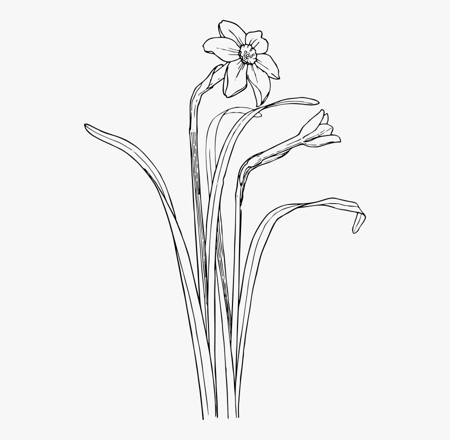 Monochrome Photography,petal,grass Family - Plant Draw Flower Bush, Transparent Clipart