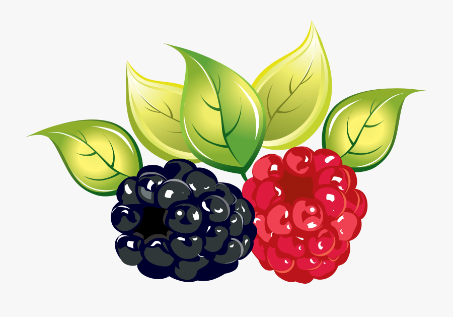 Fruit,rubus,natural Di Plant - Raspberry And Blackberry Png, Transparent Clipart