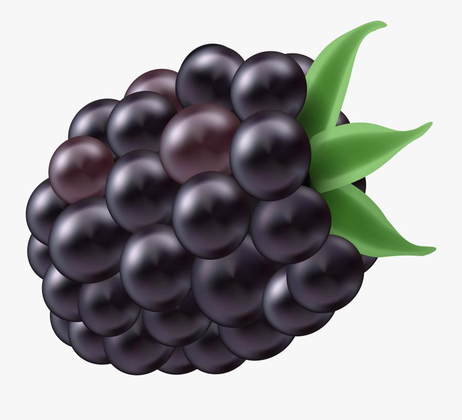 Transparent Grapevine Clipart - Grape, Transparent Clipart