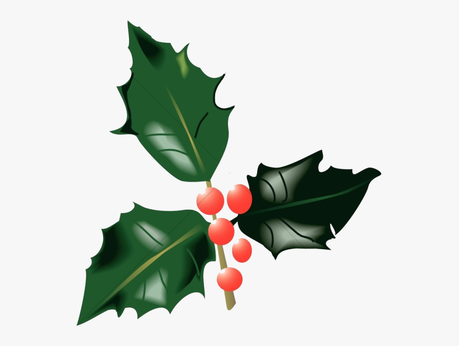 Holly Leaf Leaves And Berries Traditional Christmas - Holly Leaves And Berries, Transparent Clipart