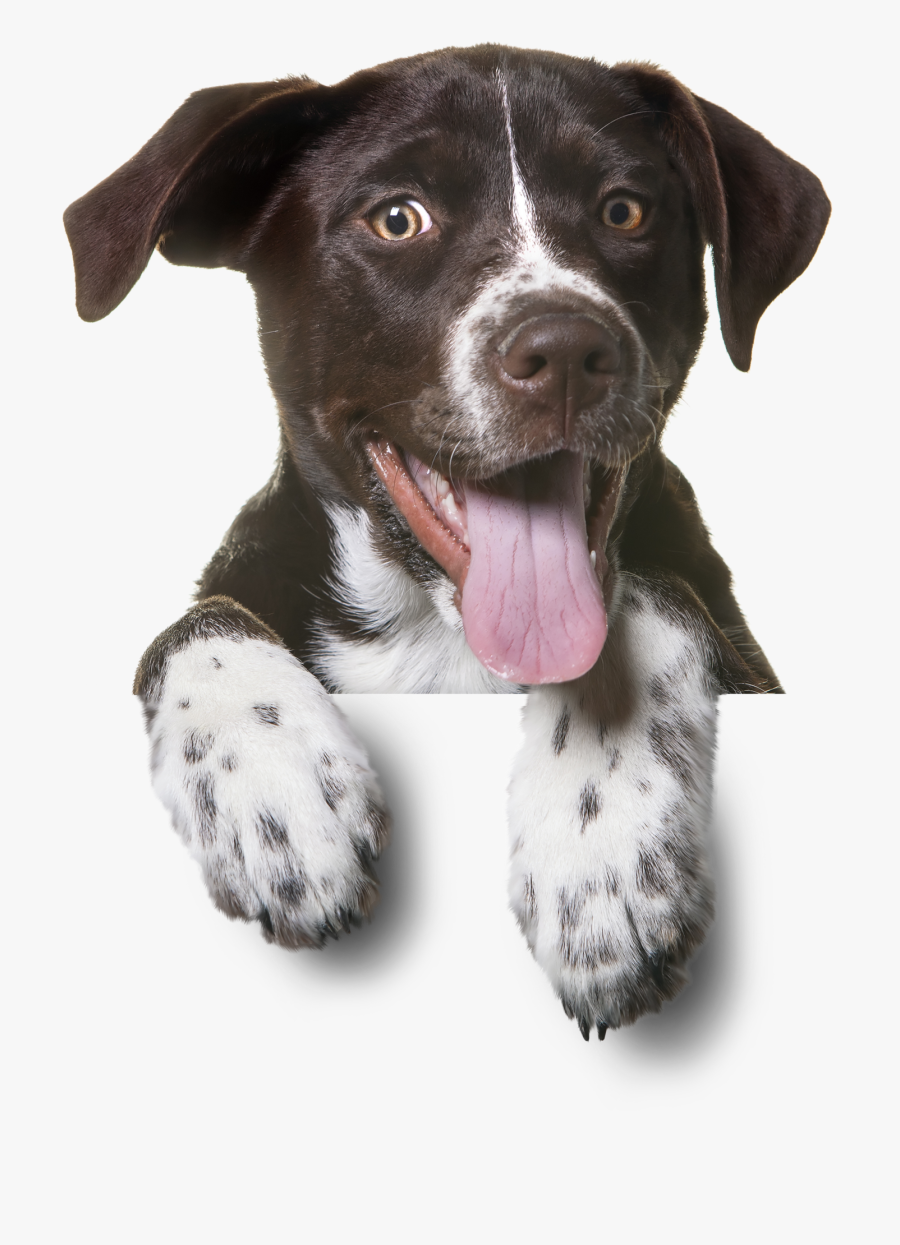 Sitting Pet Dog Cat Puppy Dogs Clipart - Funny Dog Png, Transparent Clipart