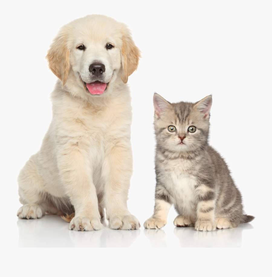 And Sitting Pet Dog Cat Kitten Clipart, Transparent Clipart