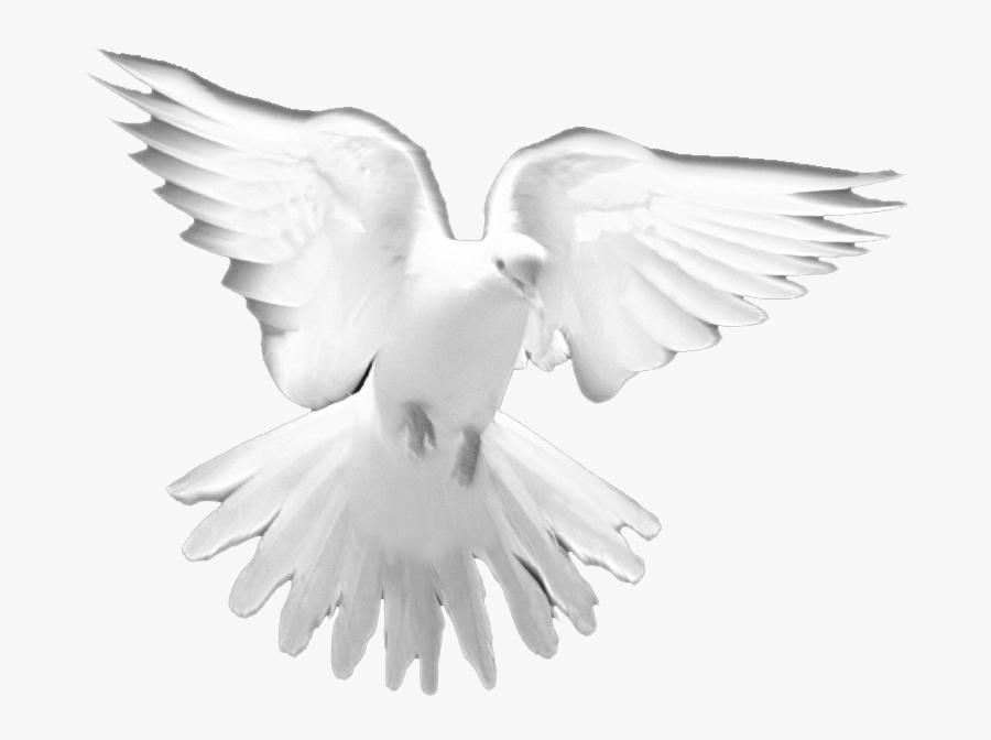 Holy Spirit Prayer Christian - Holy Spirit Dove Png, Transparent Clipart