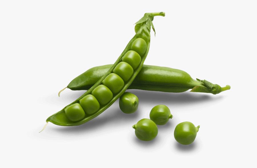 Sugar Snap Peas Png - Sugar Snap Peas Transparent, Transparent Clipart