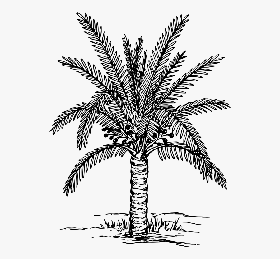 Leaf,palm Tree,plant Stem - Date Palm Clipart Black And White, Transparent Clipart