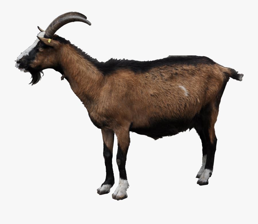 Transparent Mountain Goat Png - Illustration, Transparent Clipart