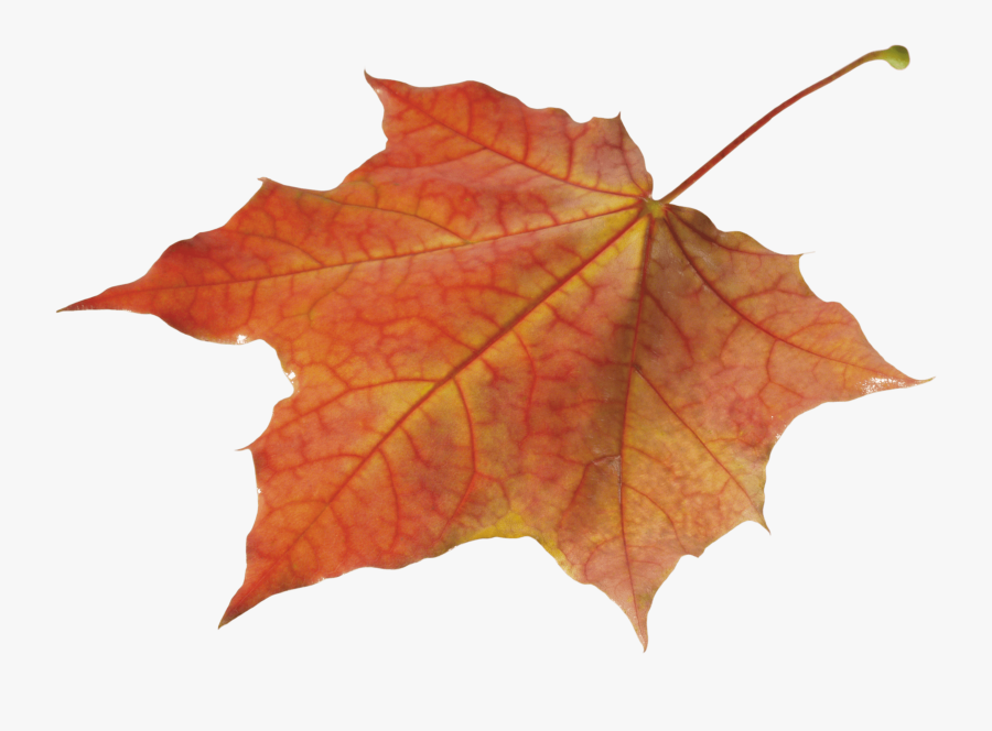Autumn Leaves Clipart Pile Fall Leaves - Autumn Leaves Png, Transparent Clipart