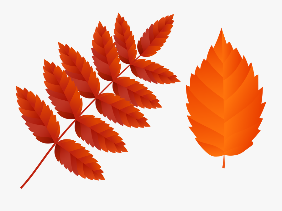 Orange Fall Leaves Clipart - Fall Leaf Png, Transparent Clipart