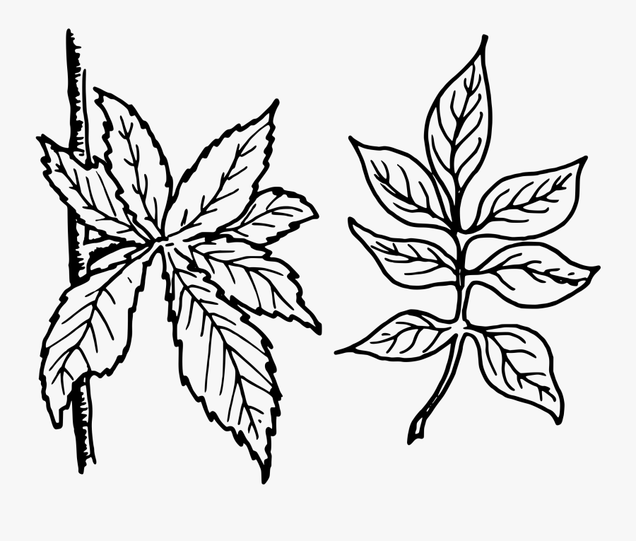 Compound Icons Png Free - Tree Leaves Line Art Vector, Transparent Clipart