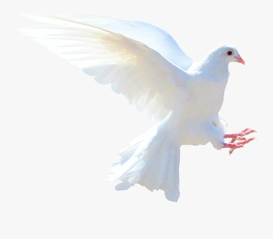 Clip Art Images Of The Holy Spirit - Holy Spirit Dove Transparent, Transparent Clipart