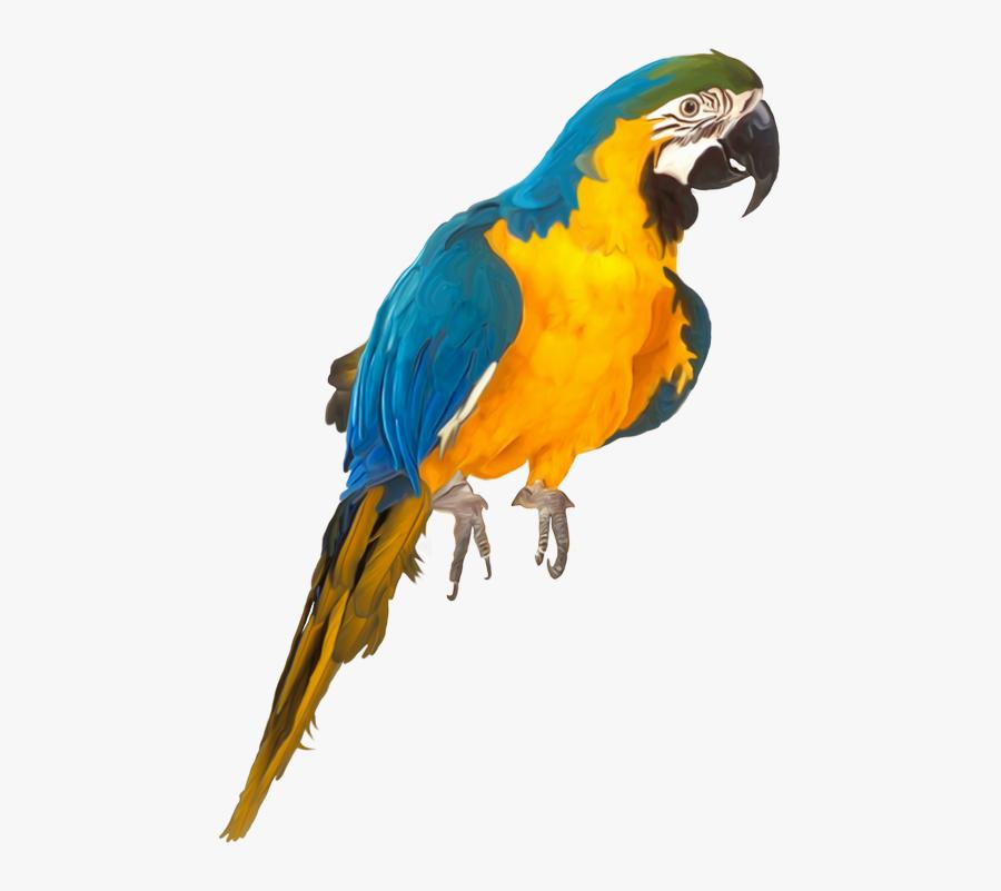 Oiseaux,birds Parrots, Clip Art, Birds, Parrot, Illustrations, - Parrot Psd, Transparent Clipart