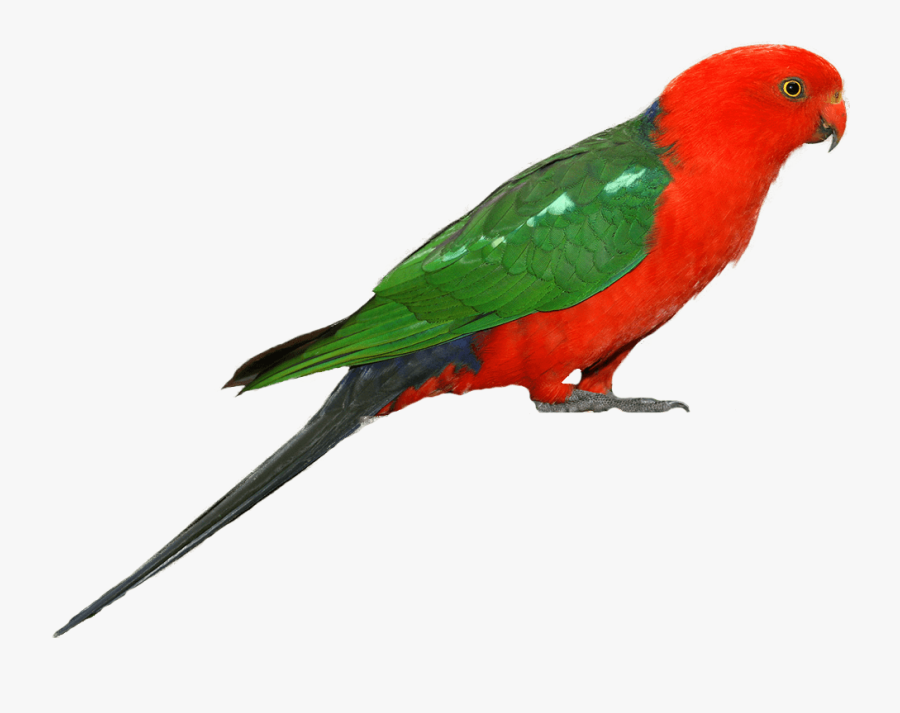 Parrot Clipart - Bird In White Background, Transparent Clipart