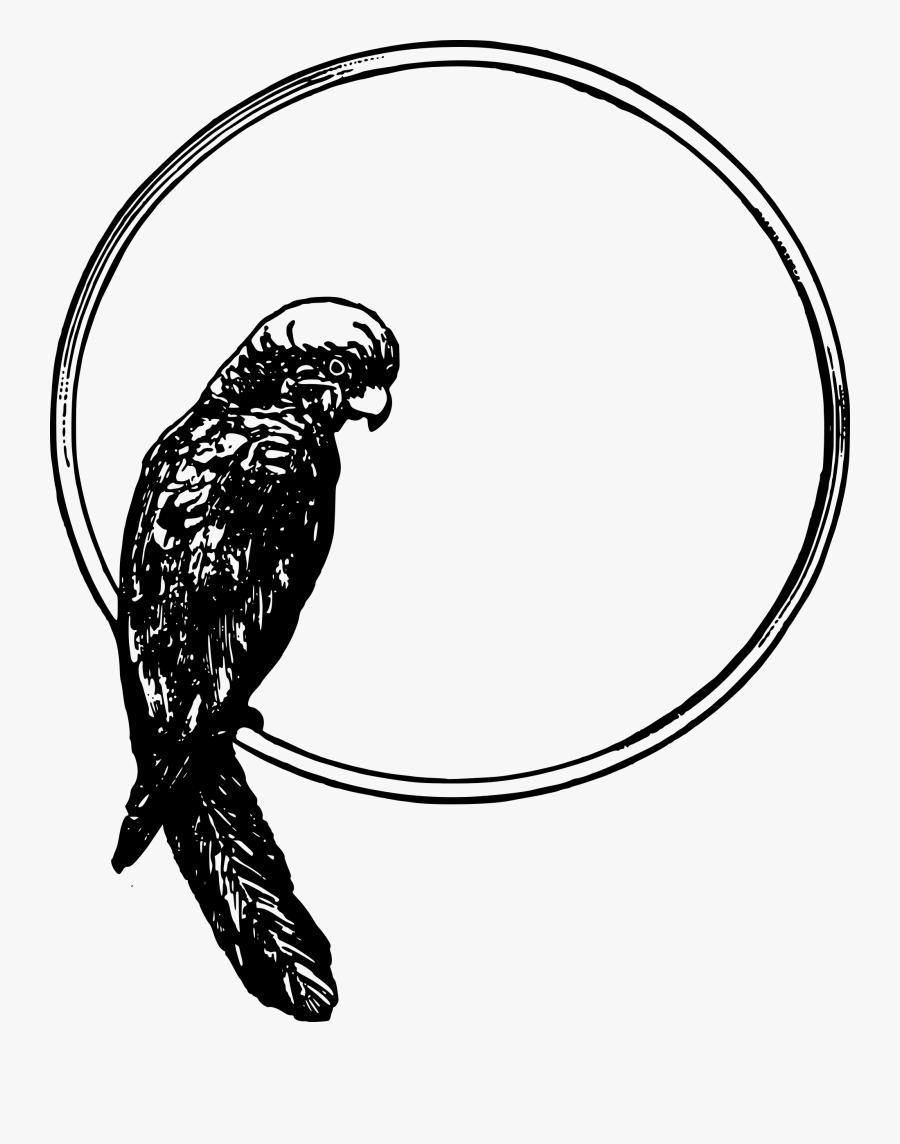 Parrot Frame - Bird In A Circle, Transparent Clipart