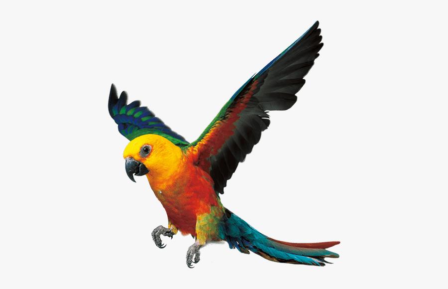 Parrot Bird Fly Png, Transparent Clipart
