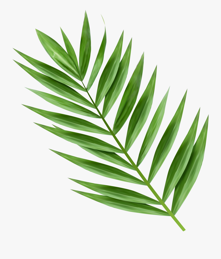 Transparent Image Gallery Yopriceville - Png Palm Tree Leaves, Transparent Clipart