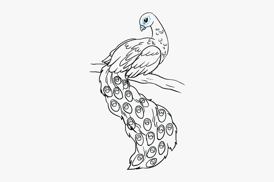 How To Draw A Peacock In A Few Easy Steps Easy Drawing - Draw A Peacock Easy, Transparent Clipart