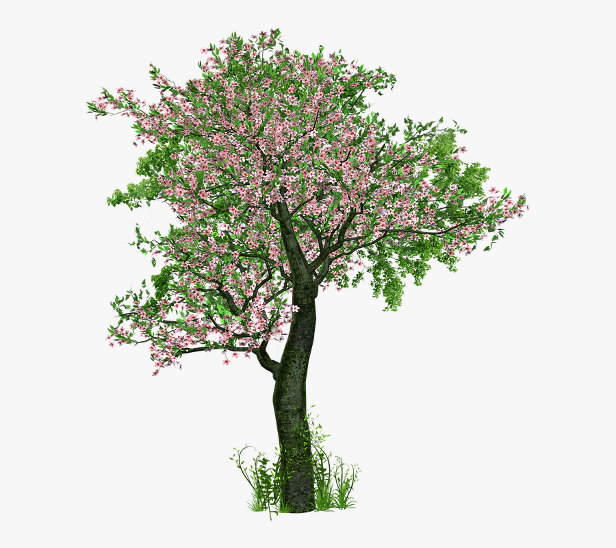 Money Tree Pictures 16, Buy Clip Art - Trees With Flowers Png, Transparent Clipart