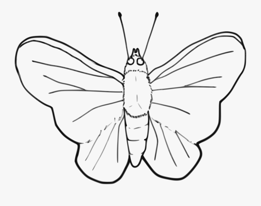Stroke Drawing Butterfly - Insects Black And White Clipart, Transparent Clipart