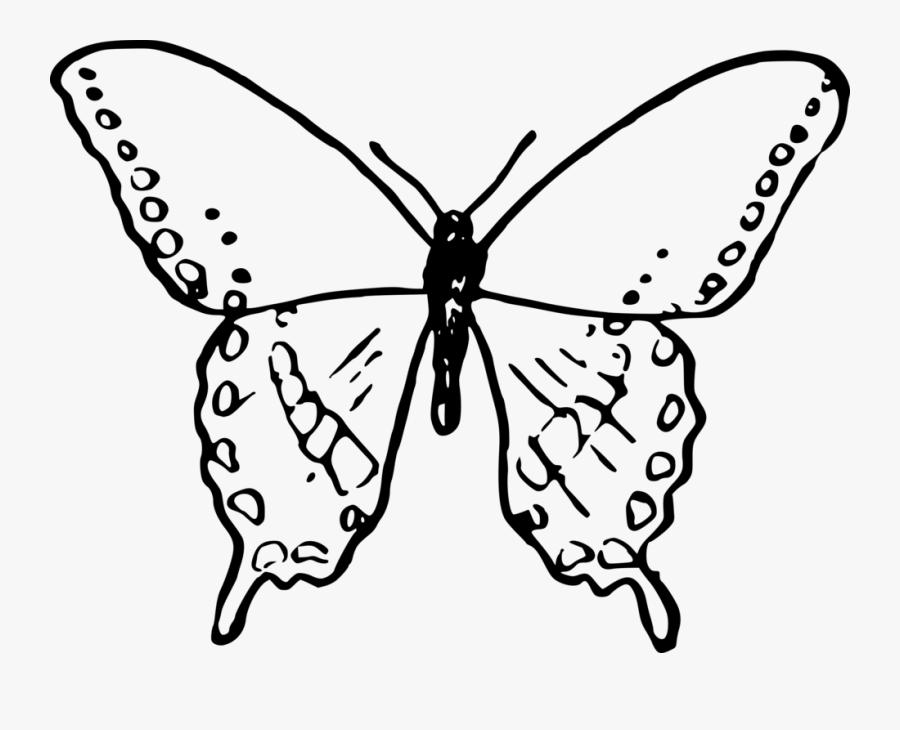 Symmetry,moth,moths And Butterflies - Gambar Sketsa Kupu Kupu, Transparent Clipart