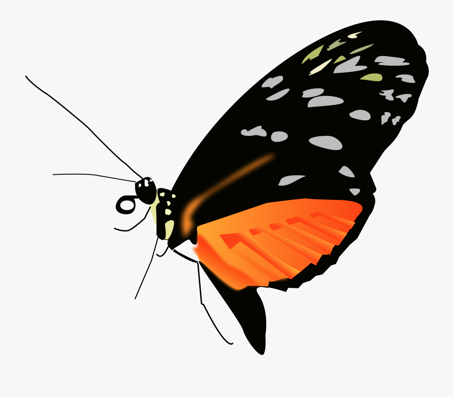 Lighter Orange-black Butterfly - Butterfly Orange And Black Png, Transparent Clipart