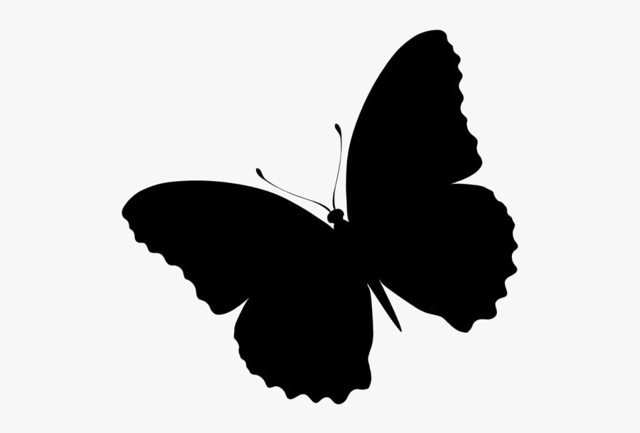 Most Beautiful Butterfly Png Clipart - Brush-footed Butterfly, Transparent Clipart