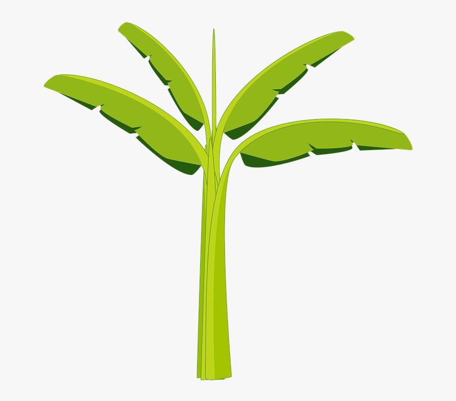 Banana Tree Banana Tree Plant Agriculture Botany - Banana Trunk Clip Art, Transparent Clipart
