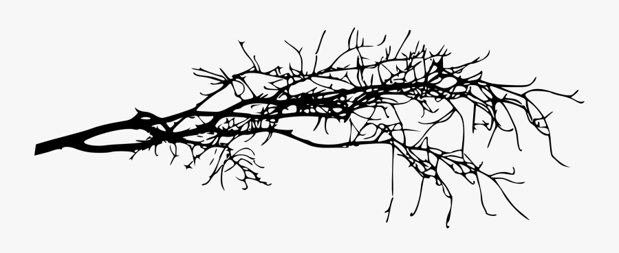 Transparent Family Tree With Roots Clipart - Tree Branch Transparent Background, Transparent Clipart
