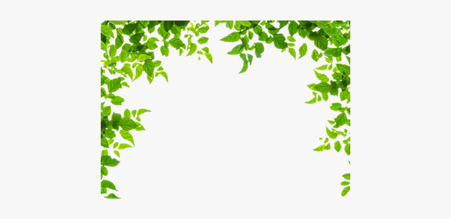 And Leaf Leaves Green Frames Borders Border Clipart - Green Leaf Border Clipart, Transparent Clipart