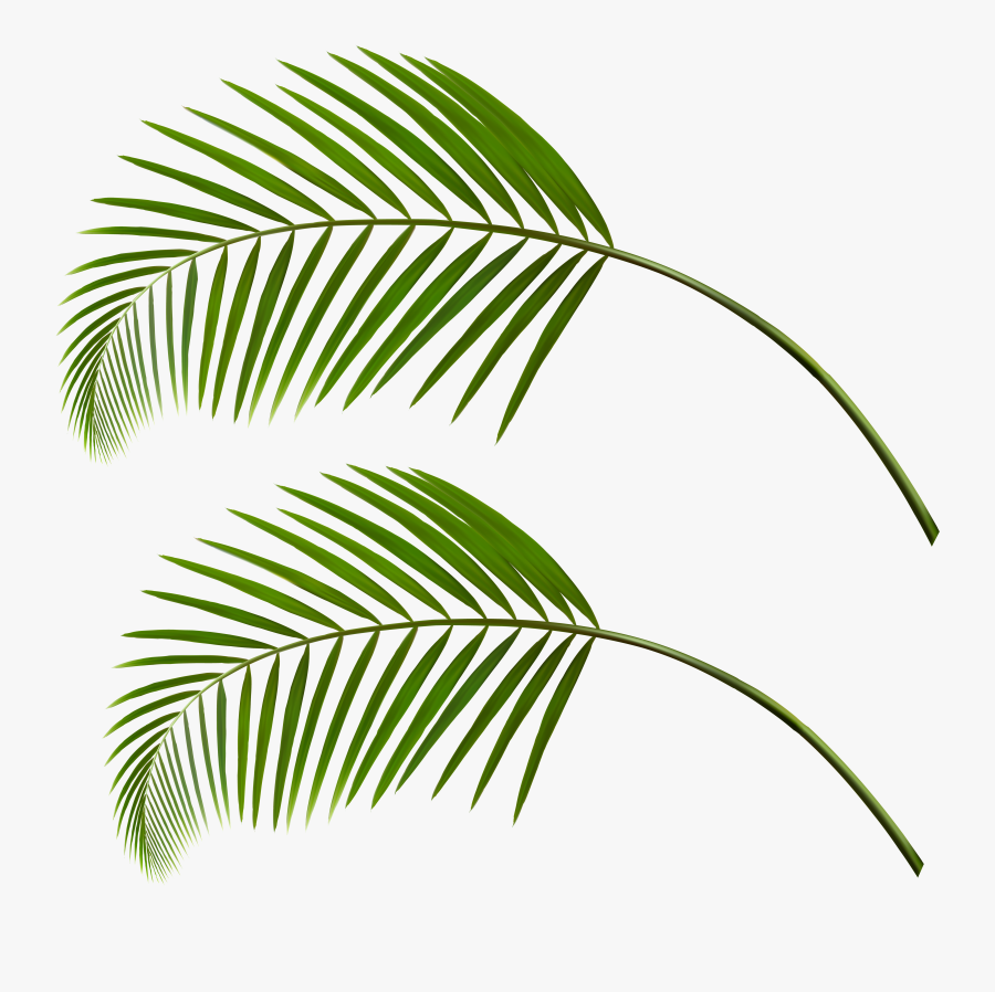 Transparent Palm Leaves Png Clipart , Png Download - Transparent Palm Tree Leaves Png, Transparent Clipart