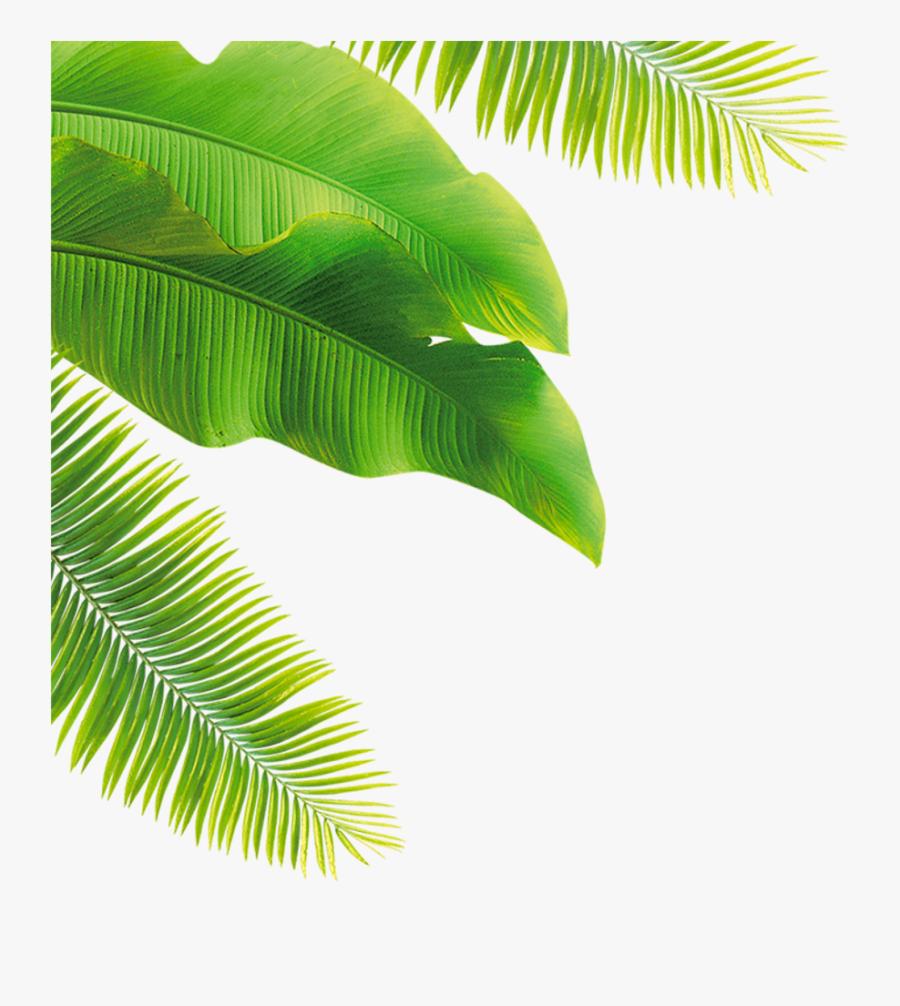 Palm Fronds Clipart - 游泳 的 圖片 動畫, Transparent Clipart