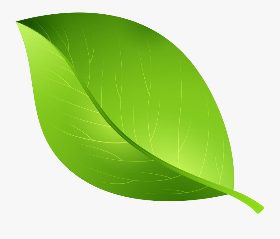Transparent Background Leaf Clipart - Green Leaf Transparent Background, Transparent Clipart