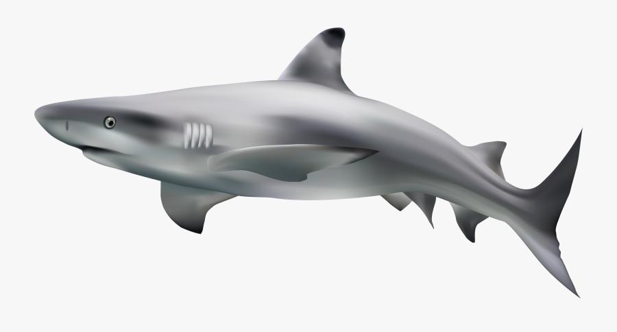 Shark Transparent Clip Art Image - Shark With Transparent Background, Transparent Clipart