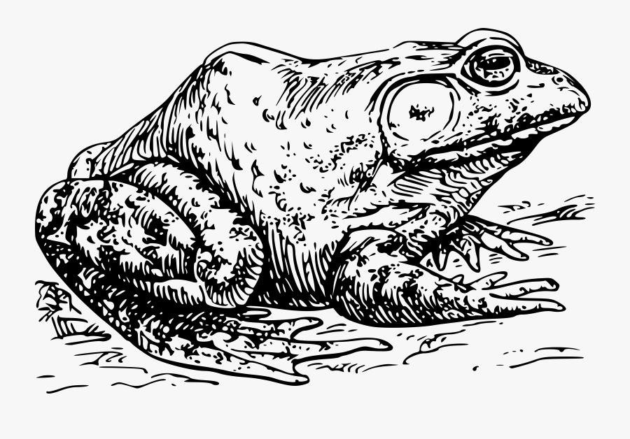 Thumb Image - Bullfrog Black And White, Transparent Clipart
