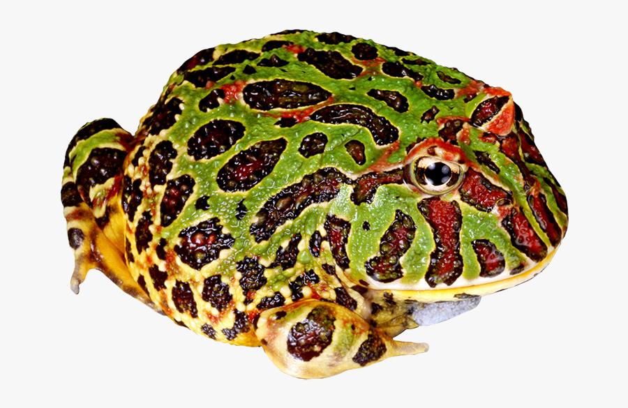 Toad Clipart Bumpy - Png Pac Man Frog, Transparent Clipart