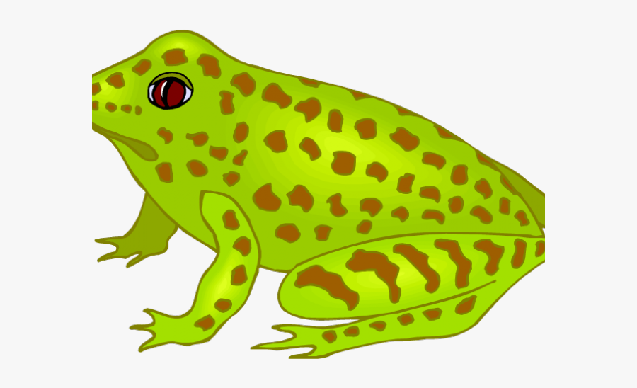 Frog Lay Eggs Clipart, Transparent Clipart