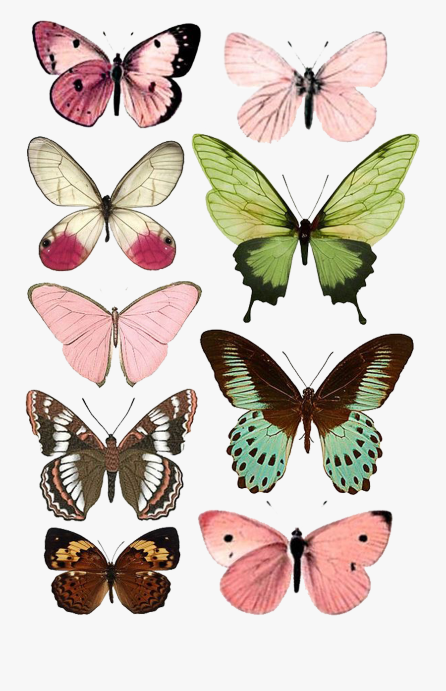 Butterfly Moth Insect Paper Printing Free Download - Free Printable Butterflies, Transparent Clipart