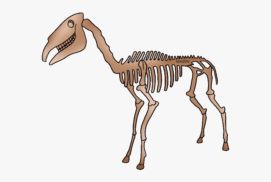 Fossil clipart, Fossil Transparent FREE for download on WebStockReview 2020