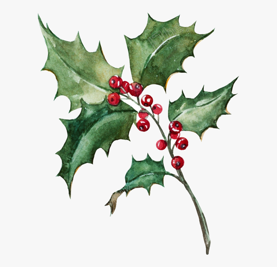 Transparent Holly Leaf Clipart - Holly Painting Png, Transparent Clipart