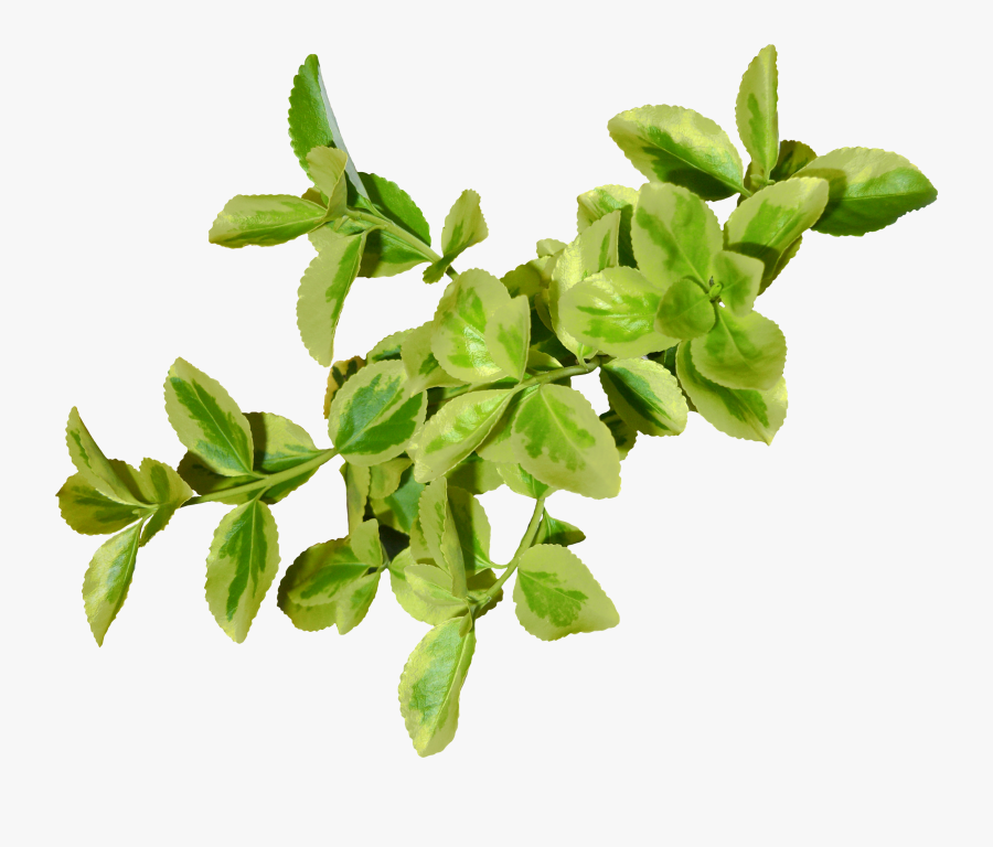 Green Leaves Png, Transparent Clipart