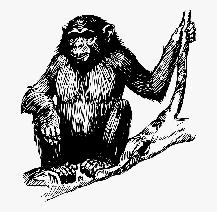 Free Vector Ape Clip Art - Drawang Ape, Transparent Clipart