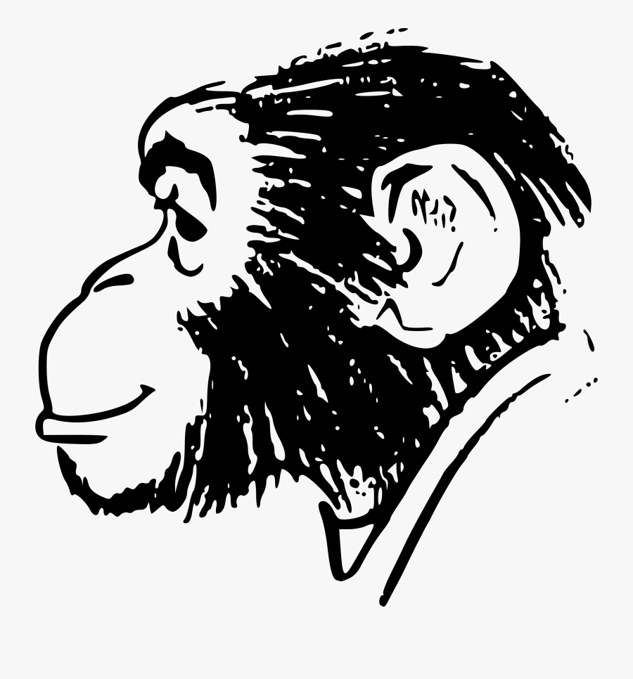 Monkey Head Drawing, Transparent Clipart