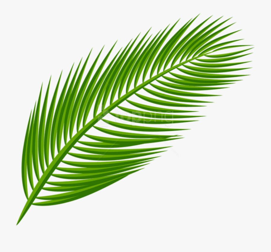 Palm Leaves Transparent Background Free Transparent Clipart Clipartkey Background daun, pattern background with exotic tropical leaves. palm leaves transparent background